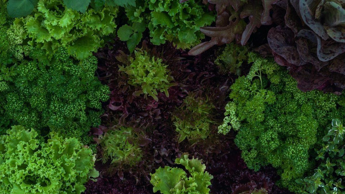 家庭菜園ベジタリアンの「ベジで食べ歩こう」☆第6回。 ミシュランシェフが作るVeganラーメン「ソラノイロNIPPON」