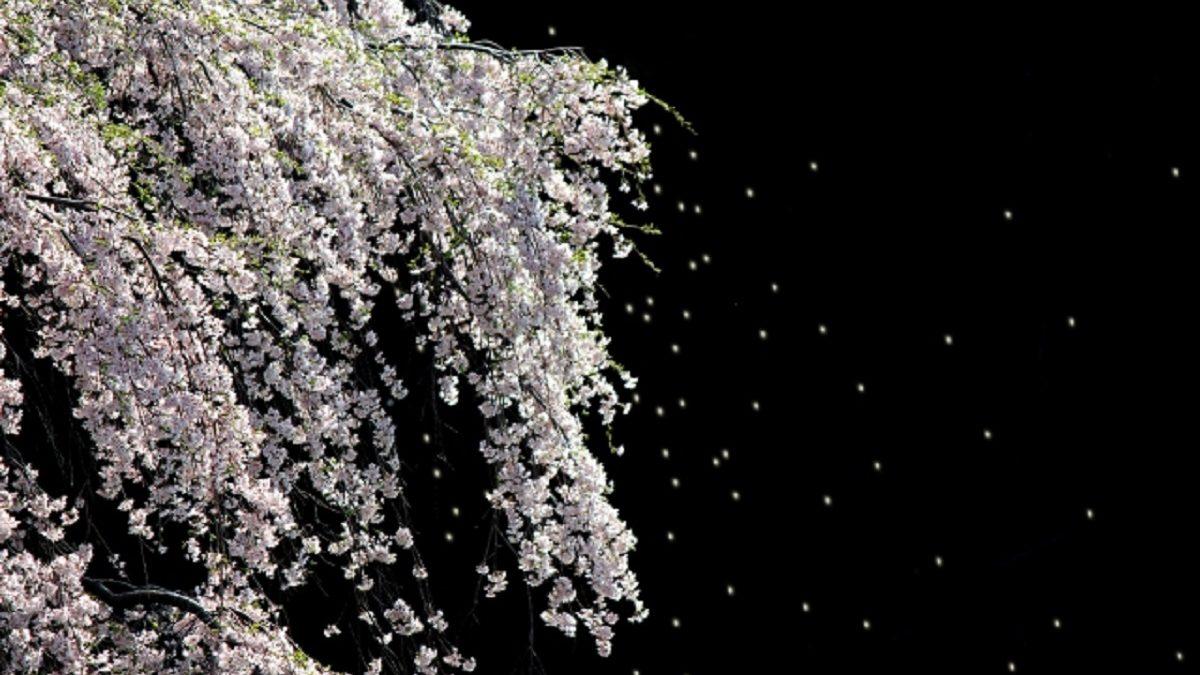 桜の季節にHしたくなる人と、したくならない人