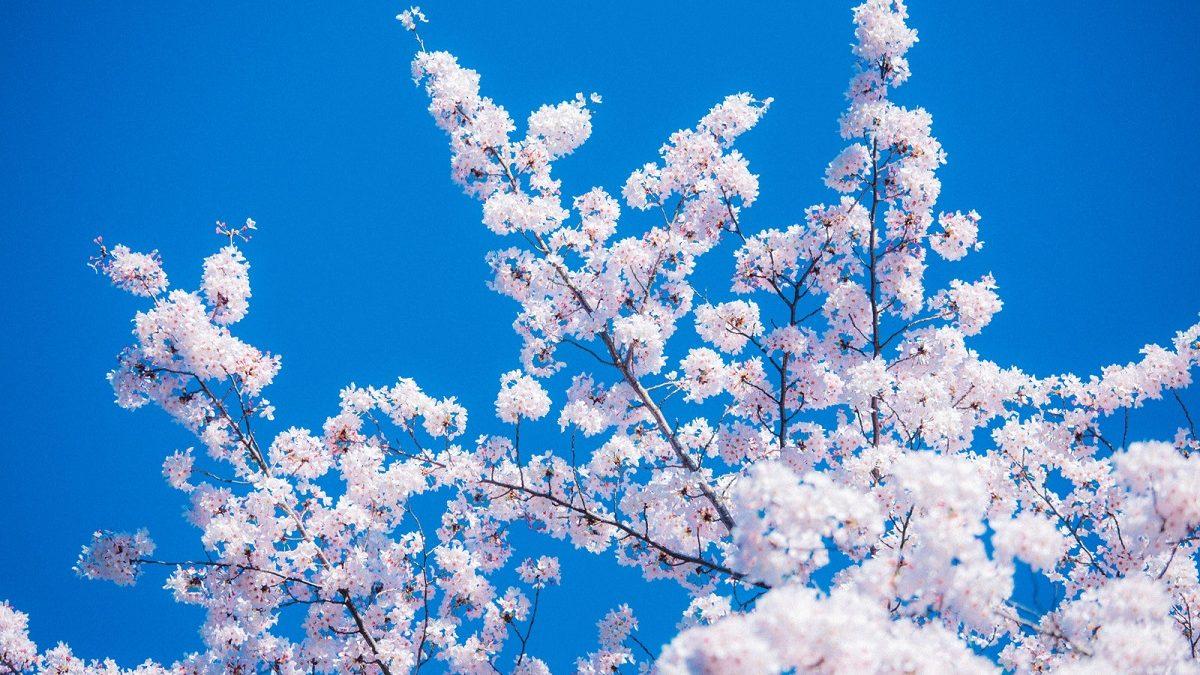 【誕生月別占い】サクラサク! 春の新環境で起こる出会いとドラマ