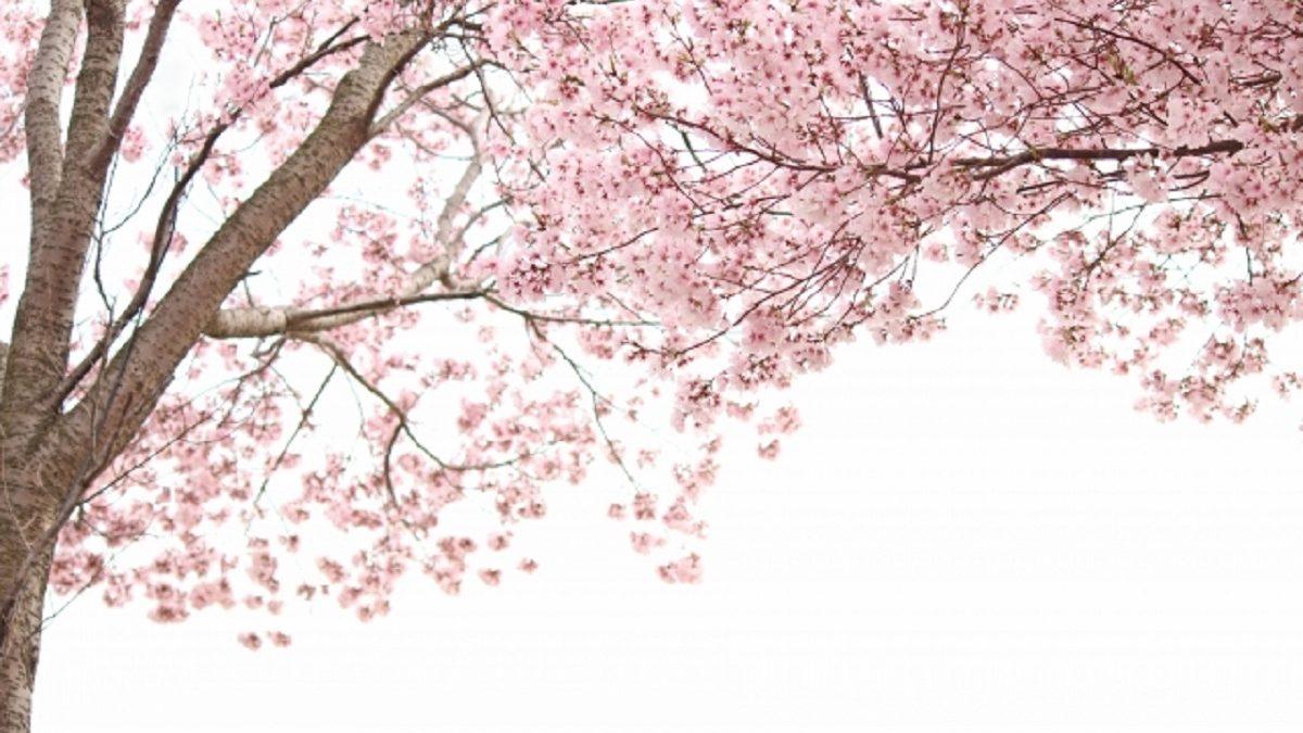 【誕生月占い】5月~8月生まれの春の新環境で起きる出会いとドラマ