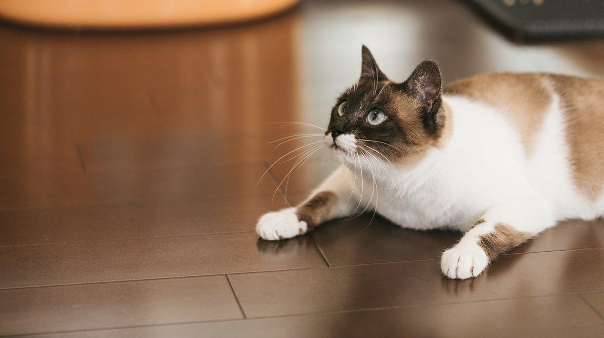 cat9V9A9033_TP_V