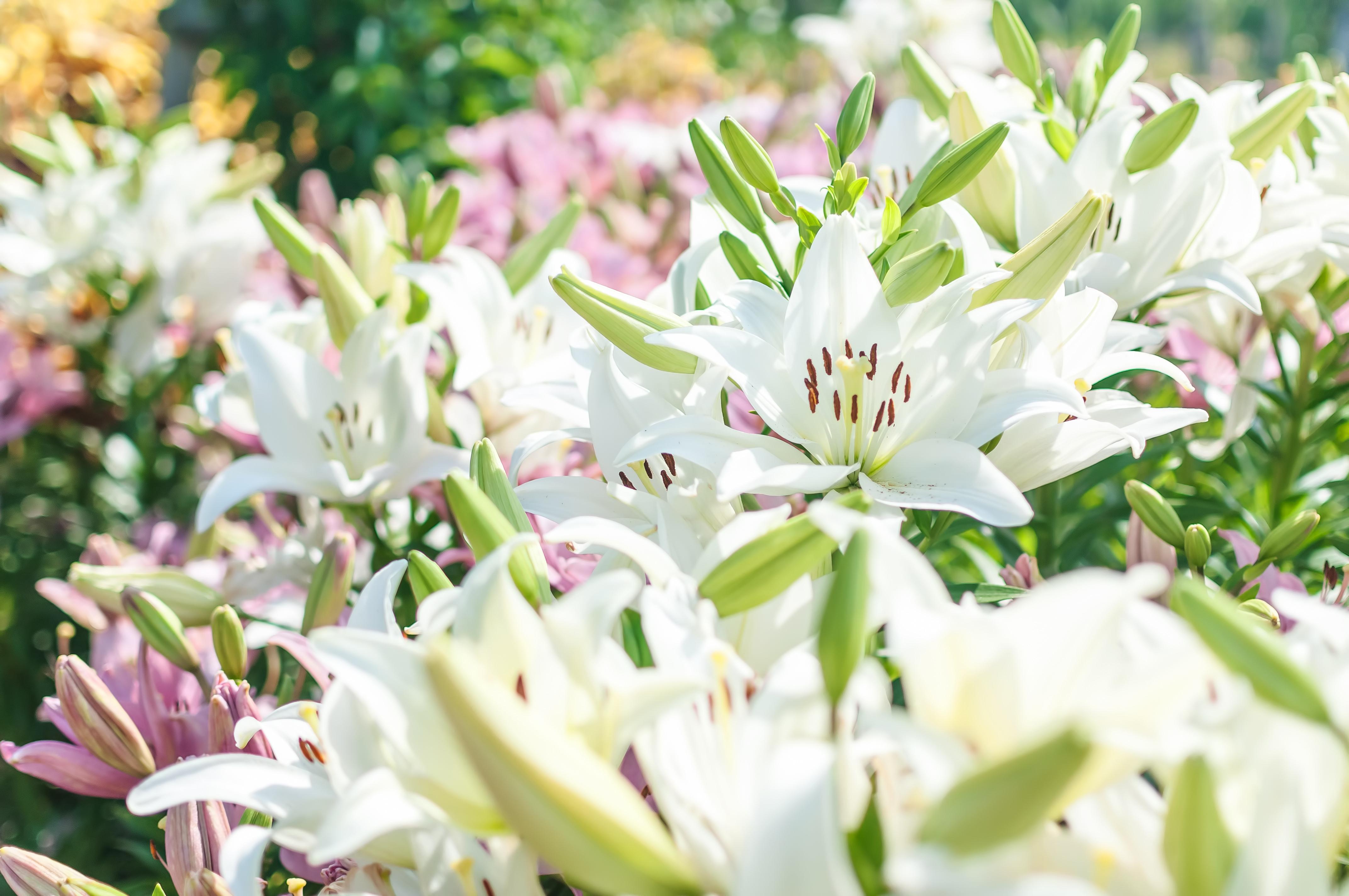 --www.pakutaso.com-shared-img-thumb-ELL88_hanahirakuyuri