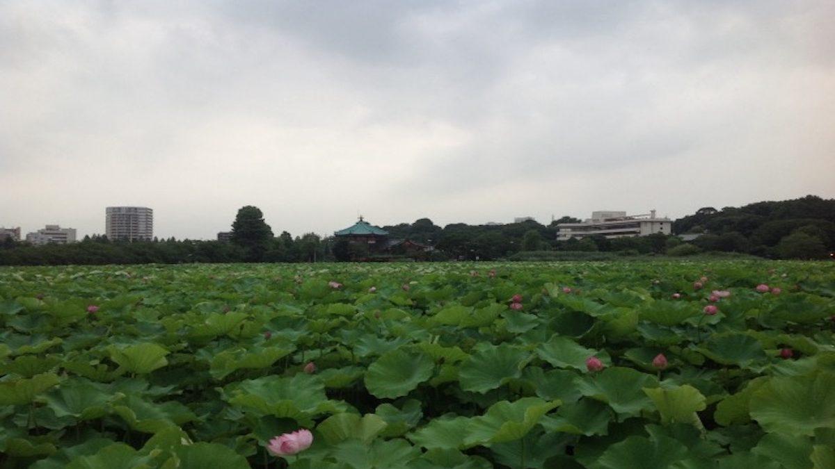別れやケンカにつながる? 風水的「上野公園」で注意すべきデートスポット