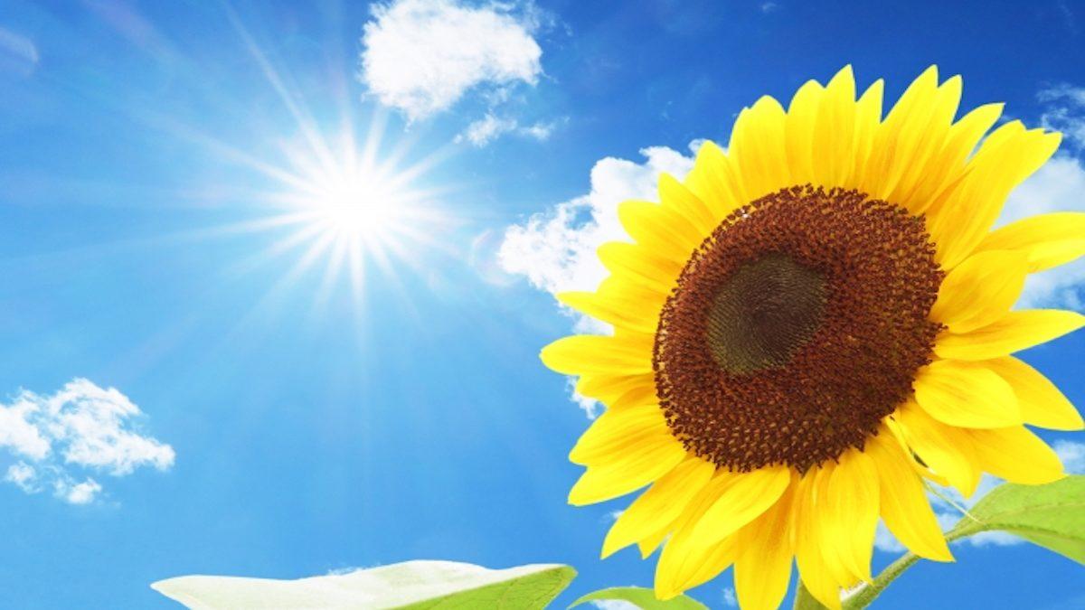 【誕生月別占い】 楽しい夏休み! 4~6月生まれに巻き起こるハッピーと注意事項!