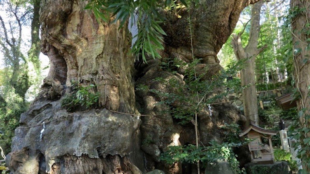 「来宮神社」迫力満点の大楠で有名な縁結びパワースポット!  実は縁切り神社でもある?