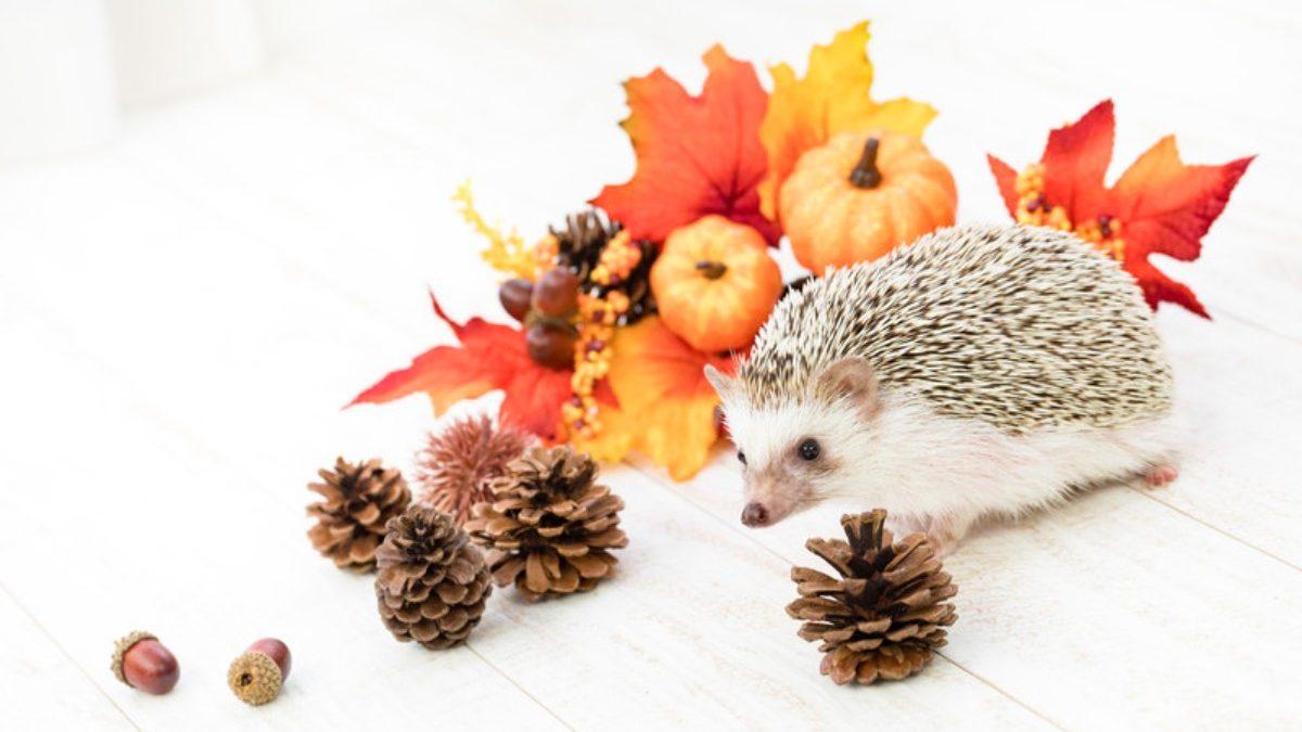 紅葉狩りで心身を癒そう! 秋におすすめのパワースポット3選