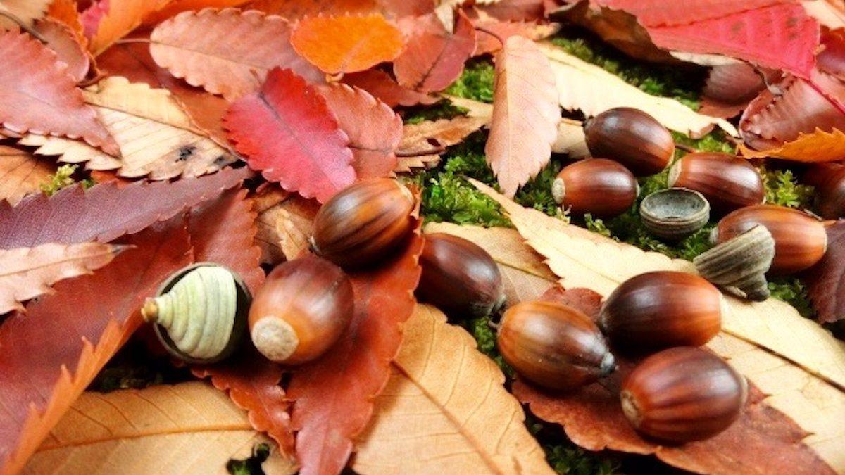 今月のときめき風水~あなたの運勢と開運方位・11月霜月(11月7日~12月6日)