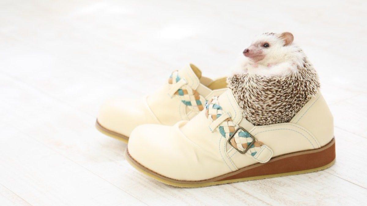 足元をオシャレにすれば周りから一目置かれるかも!ステキな靴の選び方