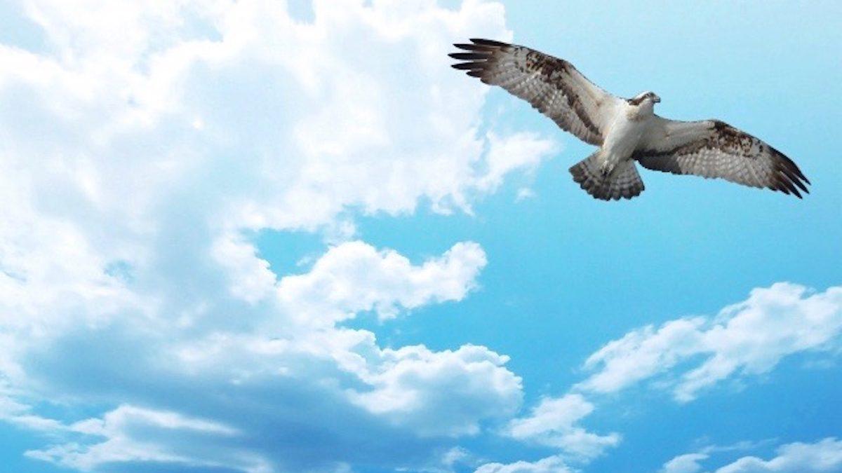 マヤ暦エネルギー予報 青い鷲の13日間
