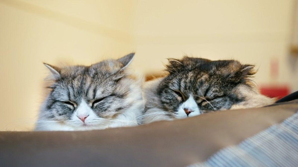 猫に学ぶ! ラブラブ夫婦でいるコツ3つ