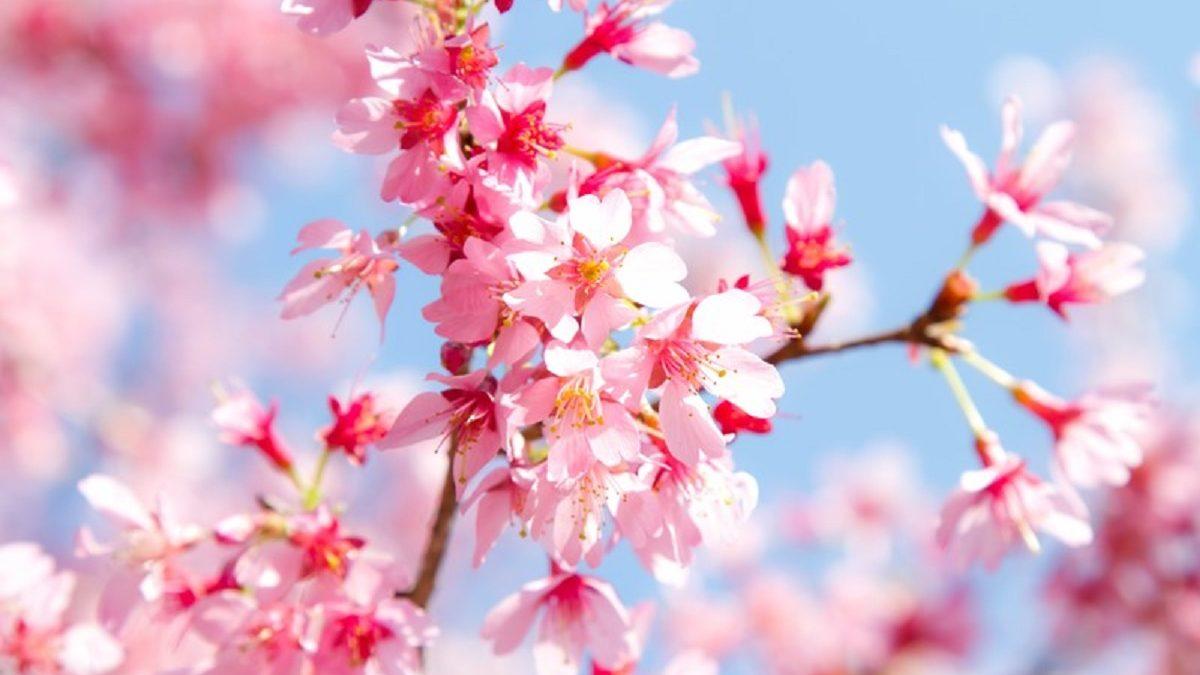 春分の日はスピリチュアルな世界と繋がる日! 女性が「○○をする」と開運メッセージが受け取れる!