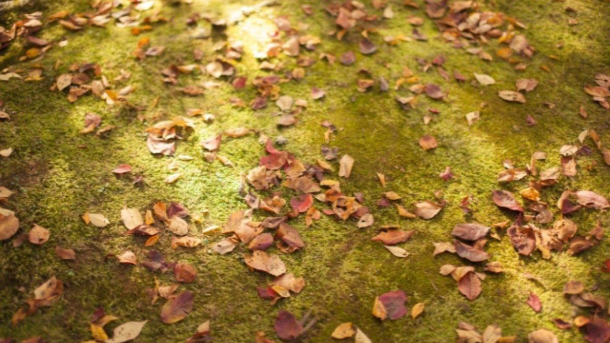 内面も美しく! 不屈の精神「土エネルギー」の持つ天然石