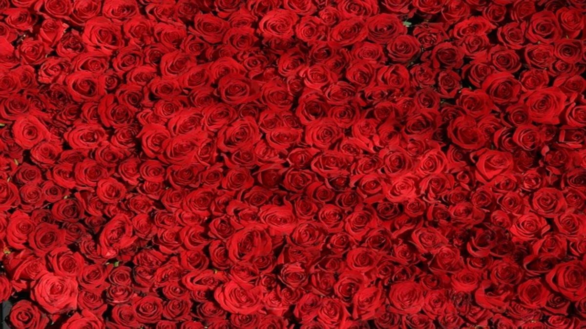 バレンタインデーまで3週間、ぶれない美人の「ものまね細胞」で美しくなる