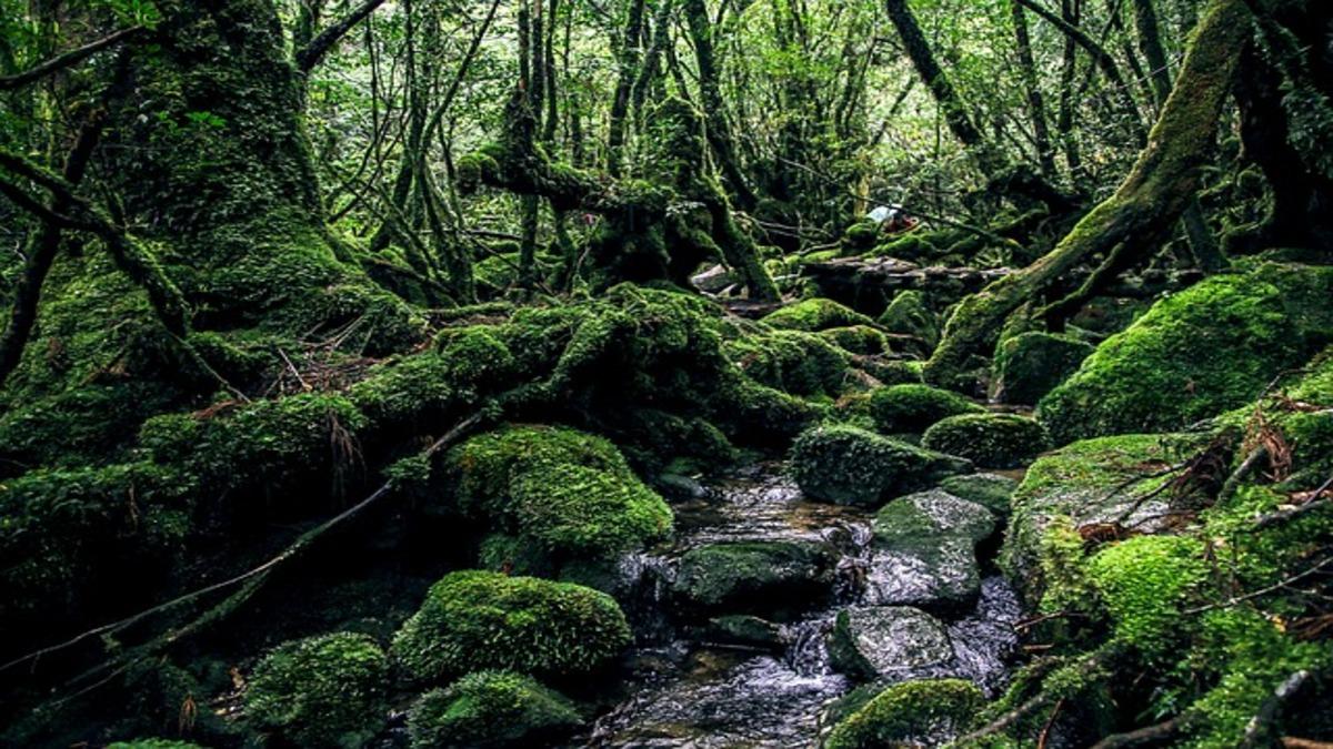 疲れたときこそ森林浴!緑のエネルギーは「○○の力」を磨く