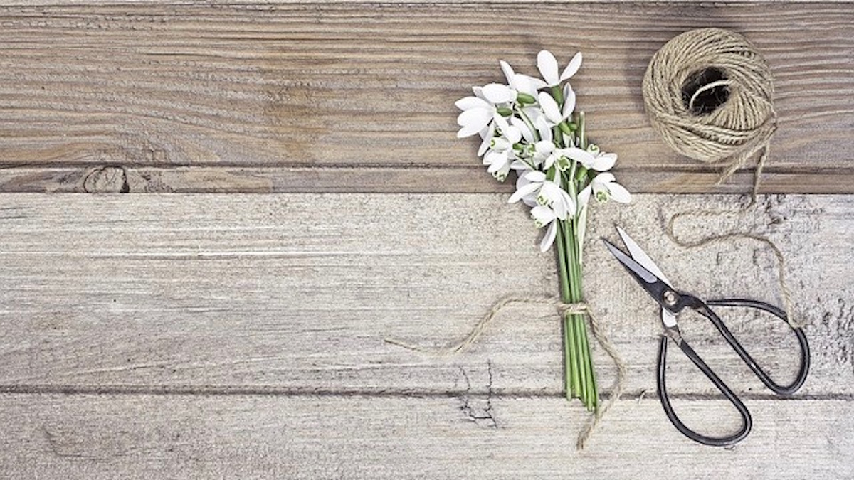 【十二支別花札占い】 4月15日~4月21日 金運・健康運と今持っていたいアイテム