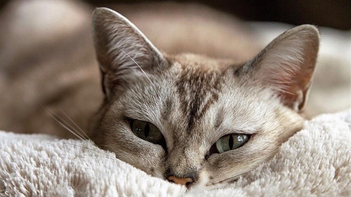 第15回・ジオマンシーでお悩み相談!「老猫と老母」