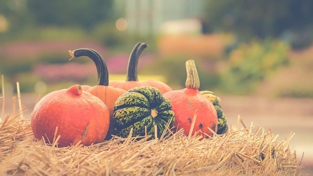 【十二支別花札占い】9月30日~10月6日 金運・健康運と10月のラッキー行動