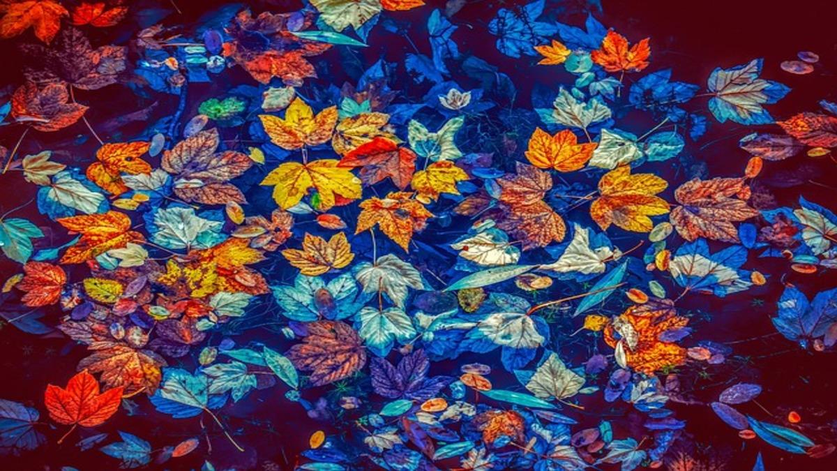今月のときめき風水~あなたの運勢と開運方位・2019年10月神無月(10月8日~11月7日)~
