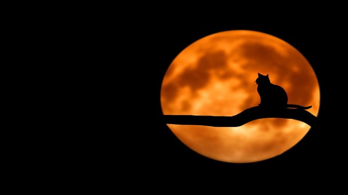 月や星の夢は吉夢? 夢は宇宙からのメッセージ!