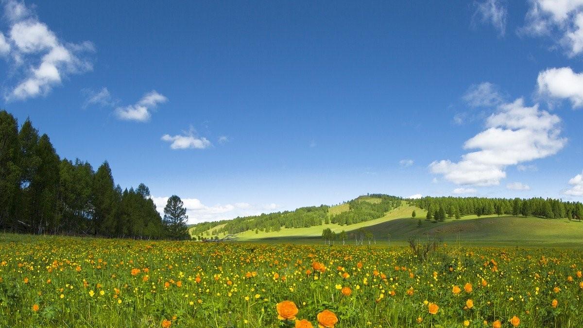 【十二支別花札占い】5月25日~5月31日 金運・健康運と5月のラッキー行動