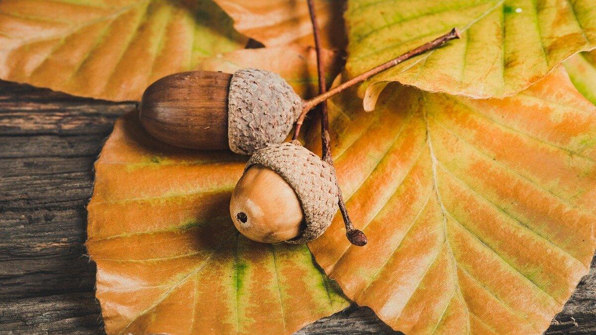 【十二支別花札占い】10月26日~11月1日 金運・健康運とラッキー行動
